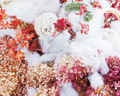 Bouquet from hydrangea, autumn leaves and snow. — Foto Stock