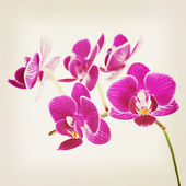Rare purple orchid with retro filter effect. — Stok fotoğraf