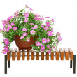 Pink petunia flowers in flowerpot on wooden bench isolated on wh — Stock Photo #50207411