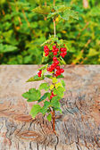 Sweet, red currant and green leaves on wooden background. — Foto de Stock