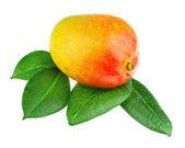 Fresh mango fruit with green leaves isolated on white background — ストック写真
