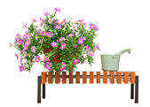 Pink petunia flowers on wooden bench isolated on white backgroun — Foto de Stock