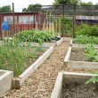 Stock Photo: Allotment garden