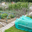Allotment vegetable garden — Stock Photo