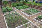 Allotment garden — Stock Photo