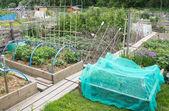 Allotment vegetable garden — Stock Photo