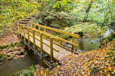 Bridge in autumnal forest — Stock Photo