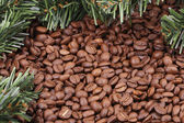 Coffee beans and fir branches — Stock Photo