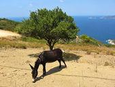 Donkey is eating — Stock Photo