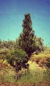 Fotografía vintage de los árboles — Foto de Stock