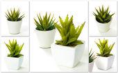 Aloe vera — Stock Photo