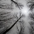 Sun through bare trees — Stock Photo