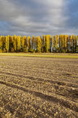 Autumn in the fields — Stock Photo