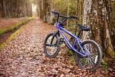 Autumn bike ride — Stock Photo