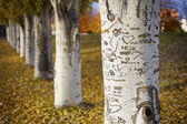 Tree Lover — Stockfoto