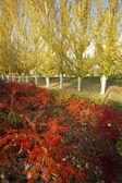 Vibrant Colors of Autumn — Stock Photo