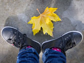 Fall is here — Stock Photo