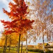 Stock Photo: Autumn in the park lagoon