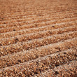 Furrows of a Plowed Field — Stock Photo