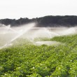 Irrigation in Field — Stock Photo #29016793