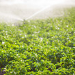 Irrigation in Field Selective Focus — Stock Photo