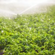 Irrigation in Field Selective Focus — Stock Photo #29016849
