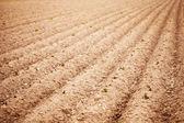 Field of Growing Potatoes — Stock Photo