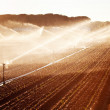 Irrigation in Corn Field — Stock Photo #29583407