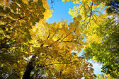 Autum Colors in the Park — Stock Photo