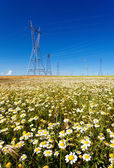 Electricity pylons in a flowers field — Stock Photo