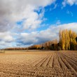 Plowed Field — Stock Photo #31496725