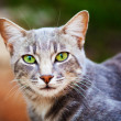 Cutel tabby cat — Stock Photo