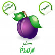 Plum - Stock Vector