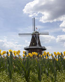 Yellow tulips and windmill- background — Stock Photo