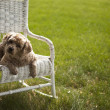 Good looking dog on a white wicker chair — Stockfoto
