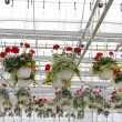 Inside Greenhouse — Stock Photo #26855005