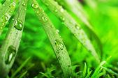 Erba verde estate in un giorno di sole — Foto Stock
