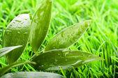 Green summer grass in a sun day — Stock Photo
