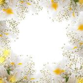 White irises — Stock Photo