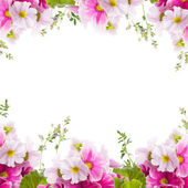 A spring primrose is in a bouquet, floral background — Stock Photo