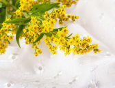 Bouquet from yellow asters, a flower background — Stock Photo