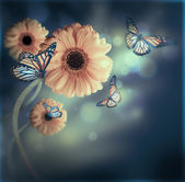 Floral background, gerbery in the rays of light and butterfly — Stock Photo