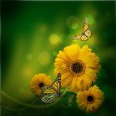Blumen hintergrund, gerbery in den strahlen des lichtes und der schmetterling — Stockfoto