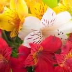 красивый цветок находится в лучах света, размыли и цветные — Стоковое фото