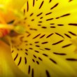 bela flor é em raios de luz, manchada e colorido — Foto Stock