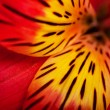 Стоковое фото: Beautiful flower is in the rays of light, blured and colored