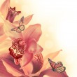 Orchids with a butterfly on the coloured background — Stock Photo #18651913