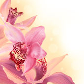 Orchids with a butterfly on the coloured background — Stock Photo
