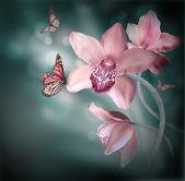 Orchideen mit einem schmetterling auf dem farbigen hintergrund — Stockfoto