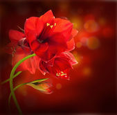 Red flowers, bouquet of gerber — Stock Photo